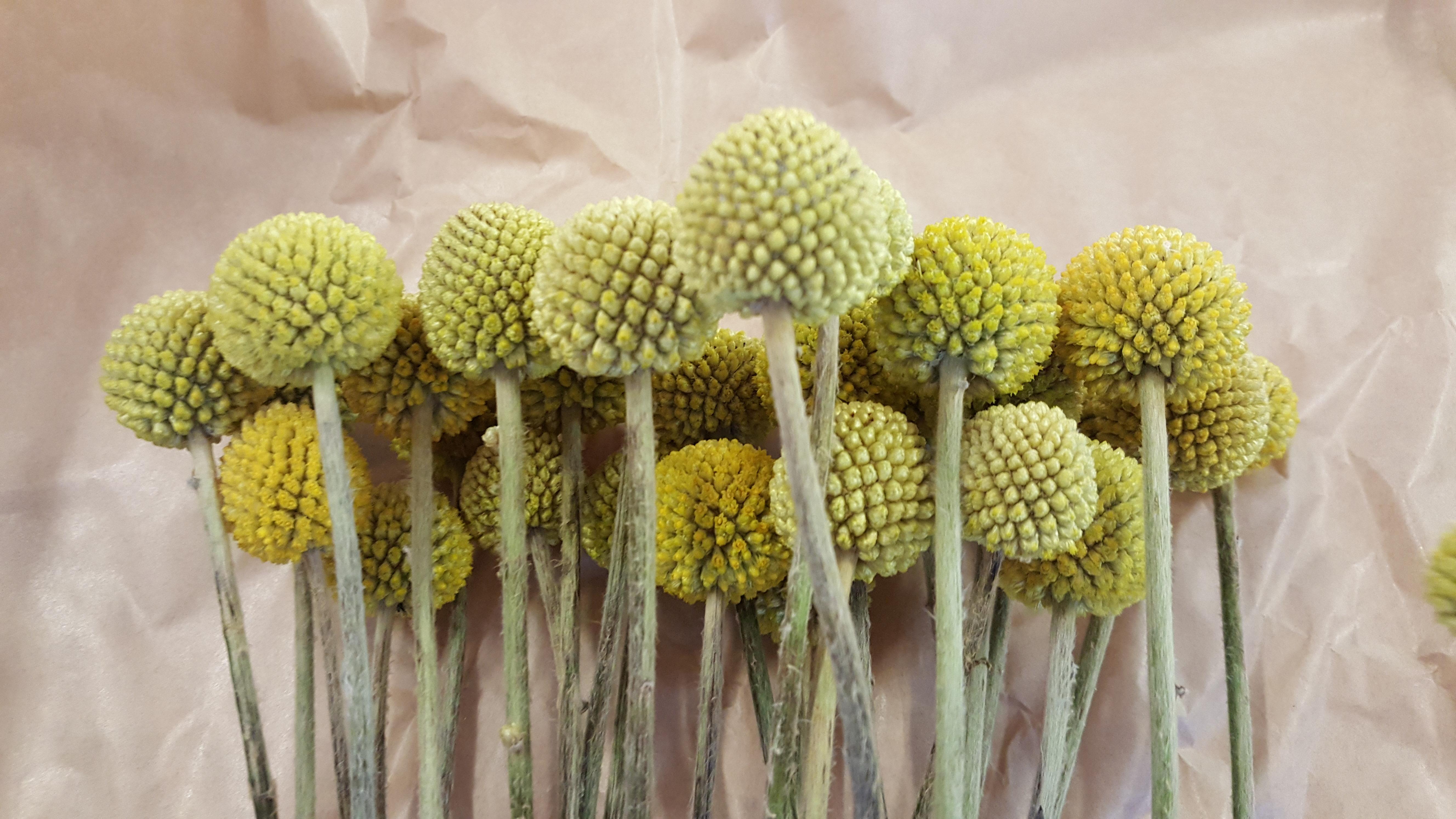 Zakupu i dostarczenia materiału szkoleniowego na zajęcia praktyczne – żywy materiał florystyczny